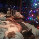 christmas-catnap